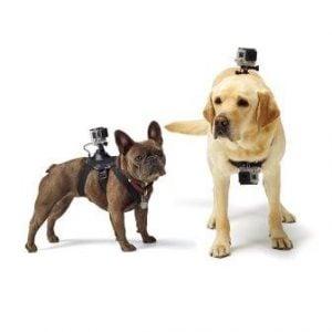 GoPro Fetch (Dog Harness)