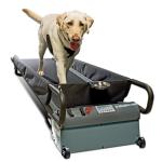 PetZen Doggie Treadmill