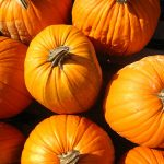 10 Things You Didn't Know About Pumpkins (Pumpkin Facts)
