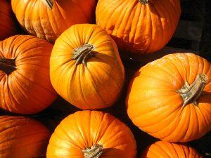 pumpkin facts