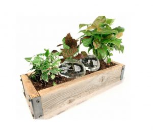 Water from a Stone Automatic Self-Watering Plant Globes