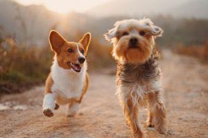 Pet Services Statistics