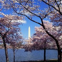 Washington DC Statistics and Facts